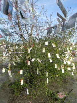 Wishing_Tree_Flint_Public_Art_Festival_Deirdre_Robb